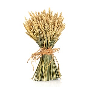 What's the Fuss About Wheat?